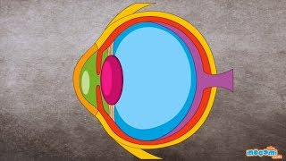 Sense of Sight (With Narration) - How the Body Works | Human Senses | Educational Videos by Mocomi