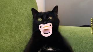 Приколы с кошками и котами #4  Подборка смешных и интересных видео с котиками и кошечками