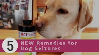 Dog Seizures: 5 New Remedies