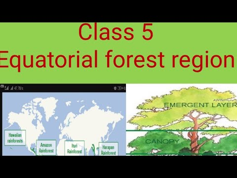 , title : 'Class 5 Equatorial forest region
