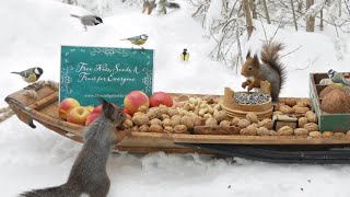 The Traveling Bird Feeder - Relax With Squirrels & Birds ( 1 Hour )