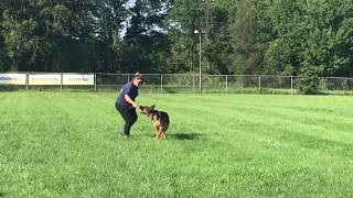 Pro Canine Center