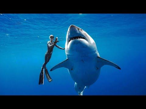 Massive Great White Shark Spotted Near Hawaii