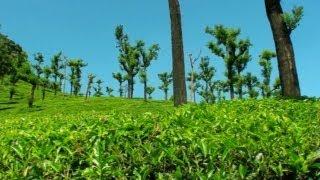 Tea Estates in Valparai Hill Station in Tamilnadu