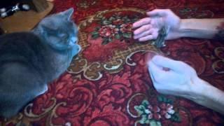 Ловят ли коты хомяков