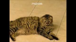 preview picture of video 'מטרות בחינוך'