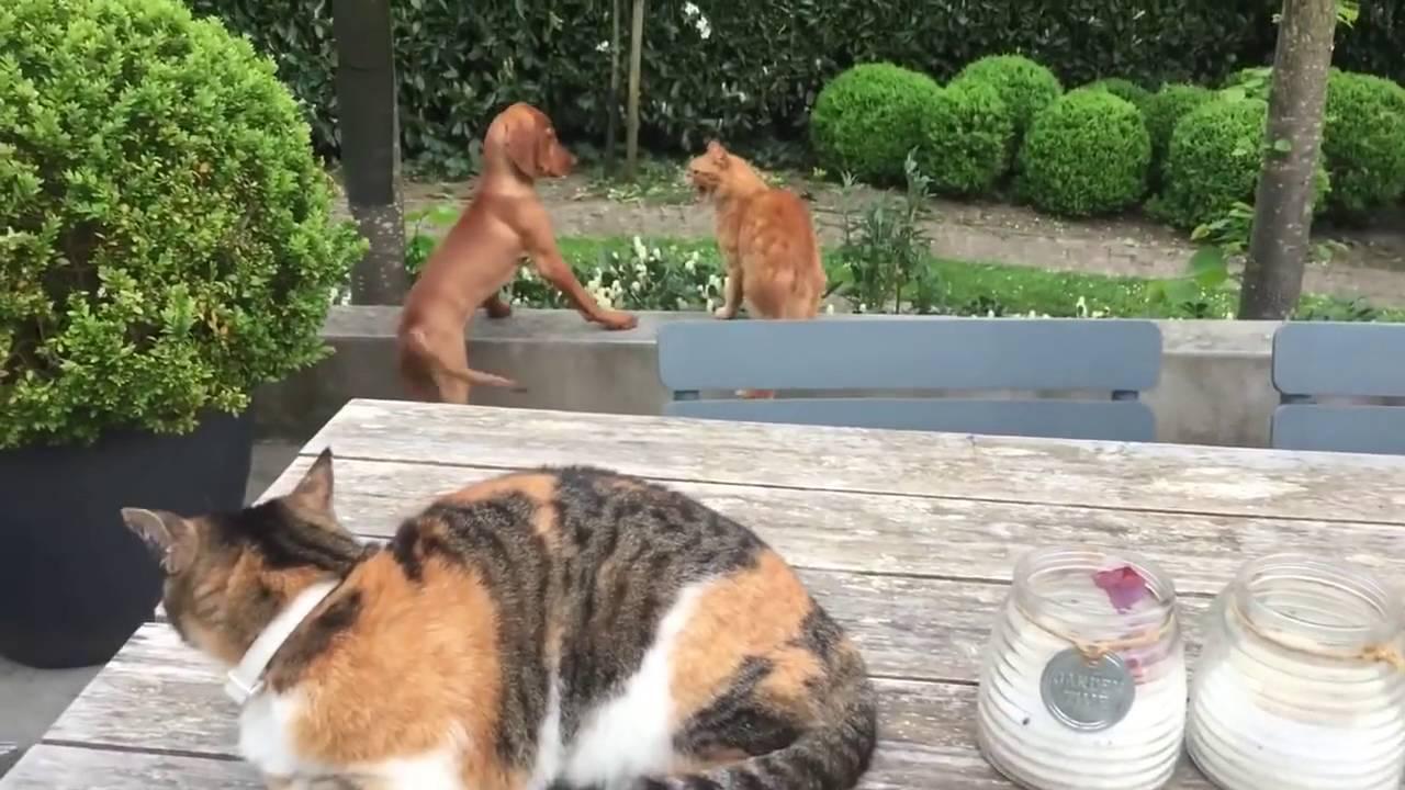 Кот защитил своего друга — собаку! фото