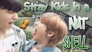 Stray Kids in a NUTSHELL