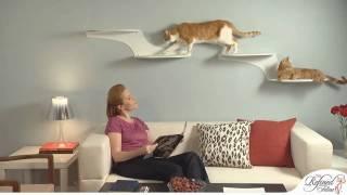The Refined Feline Cat Furniture Showcase