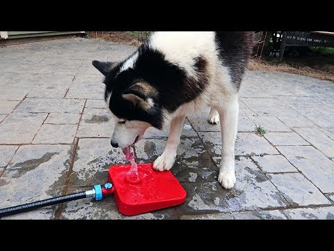 What is Dog Water Fountain?