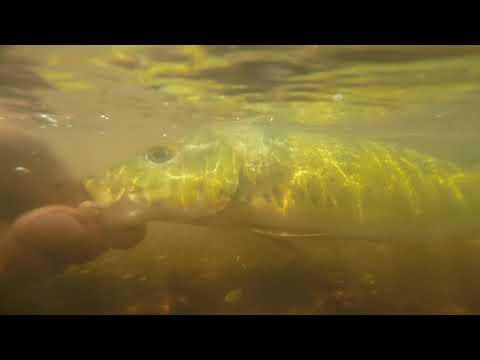 pescaria de tucunare em alvorada do sul ...rio vermelho