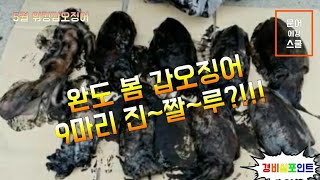 완도 봄 갑오징어 9마리 실시간 뽑기 2018년5월25일 워킹