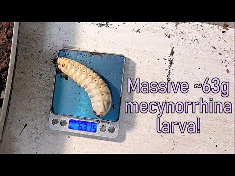 Parazitii intestinali in timpul sarcinii