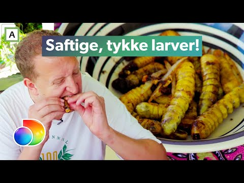 Rødøy singelklubb