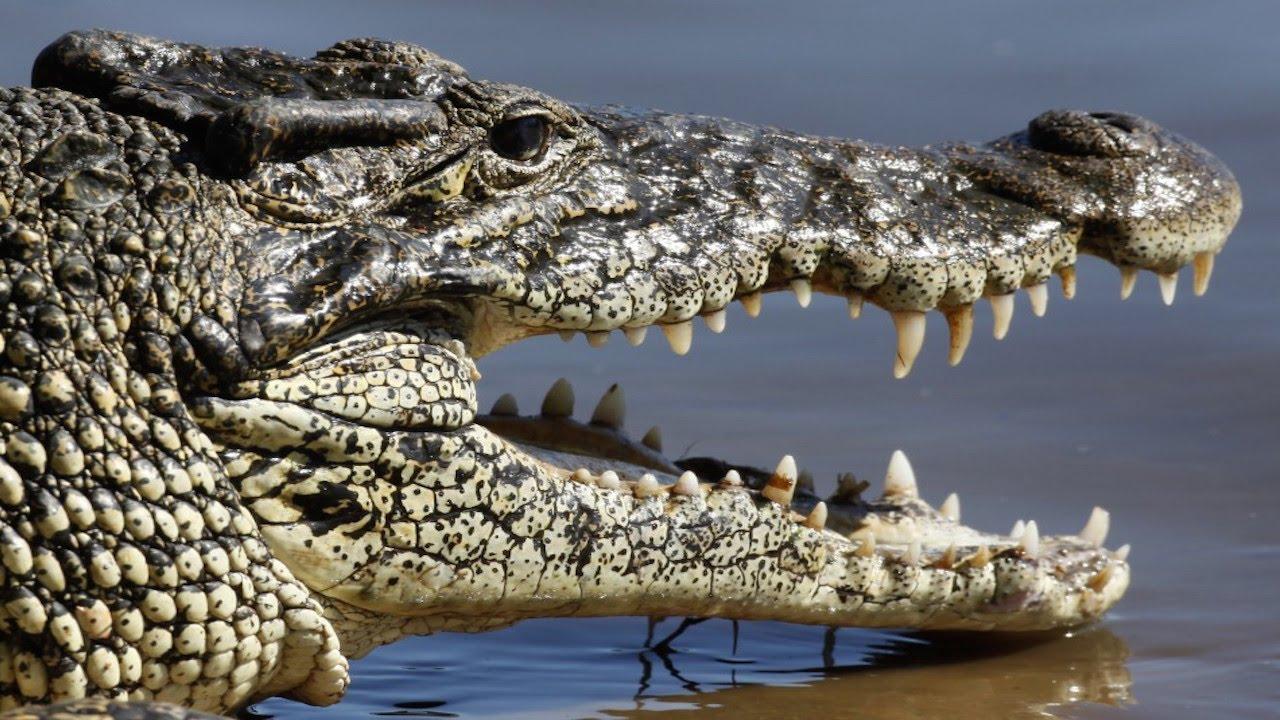 Crocodiles Replacing Guards At Prison thumbnail