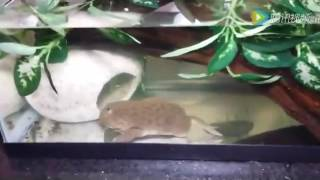 Жаба Словила Большую Мышь Toad word more Mouse
