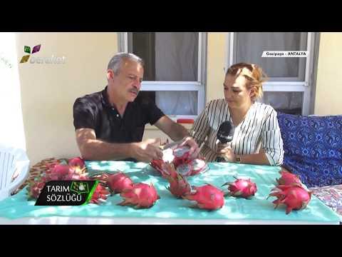 Ejder meyvesi nasıl yenir, tadı nasıldır?