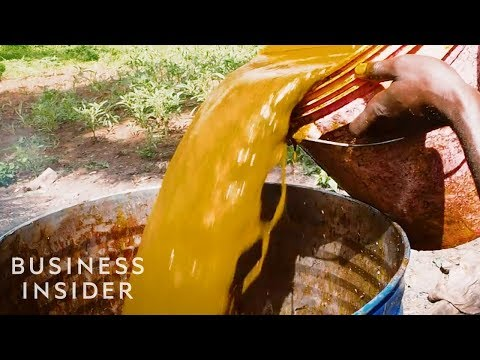 Palm Oil Is the Cheapest Plant Oil on the Planet, But Why?