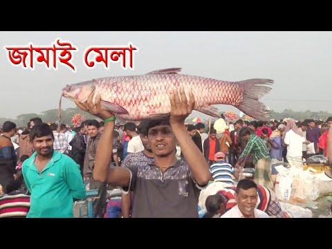 গাজীপুরের বিনিরাইলে বসেছে জমজমাট 'জামাই মেলা'