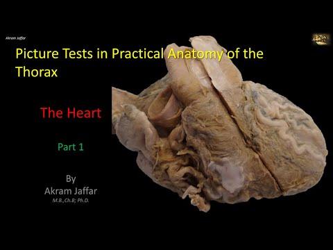 Test obrazkowy z anatomii klatki piersiowej - serce (część 1)