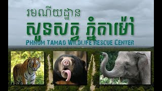 preview picture of video 'សួនសត្វ ភ្នំតាម៉ៅ Phnom Tamao Wildlife Rescue Center'