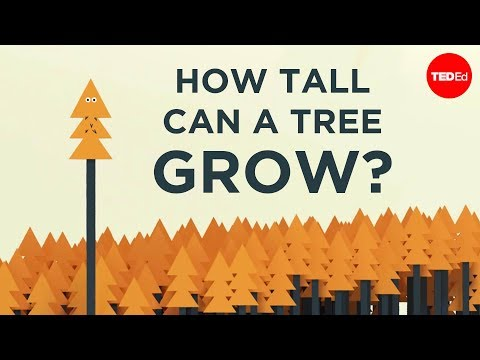 Is There a Limit on How Tall a Tree can Grow?