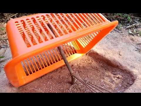 Best way to installed bird trap Using plastic basket - Plastic basket bird trap