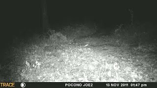 Northern Flying Squirrels-Endangered Species