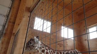 Welcoming Day for April the Giraffe