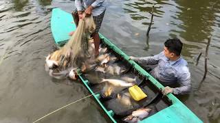 Top 3 Cast Net Fishing River Monsters Red Belly Piranhas