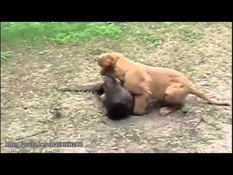 Amizades Inusitadas Entre Animais!