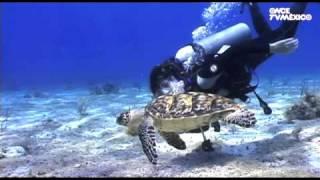 Nuestros Mares - Tortuga marina