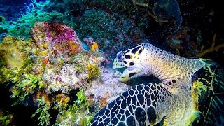 Cozumel Dive Trip May 2017