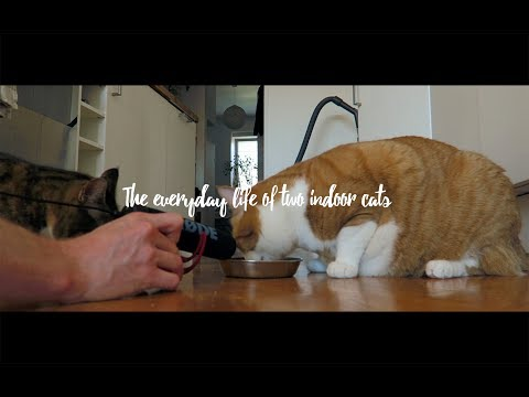 Not just another cat video - My Røde Reel 2017 BTS