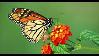 butterflies - Kacey Musgraves