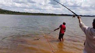 Cá Trắm Cỏ 4kg, ở Hồ Ekao Daklak