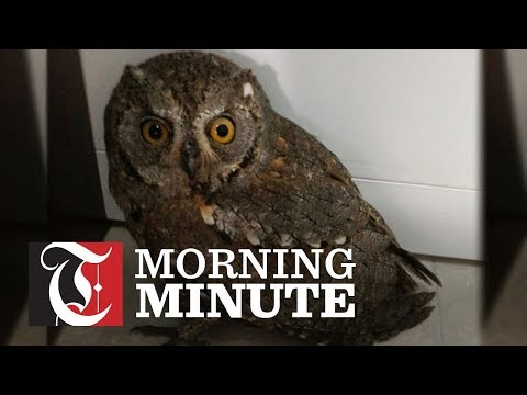 Citizen finds eagle owl in Oman