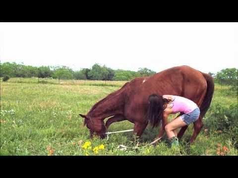 Come Far Sdraiare Un Cavallo.Come Posso Far Sdraiare Il Mio Cavallo Yahoo Answers
