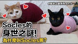 【Socles的身世之謎!為什麼叫Socles呢?】志銘與狸貓