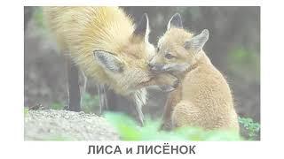 Животные России и детёныши  Развивающее видео  Познаём Мир
