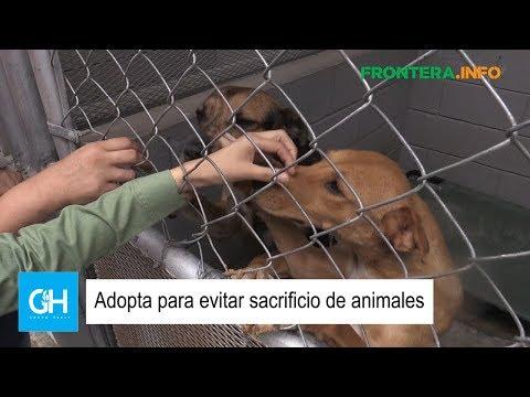 Adopta para evitar sacrificio de animales