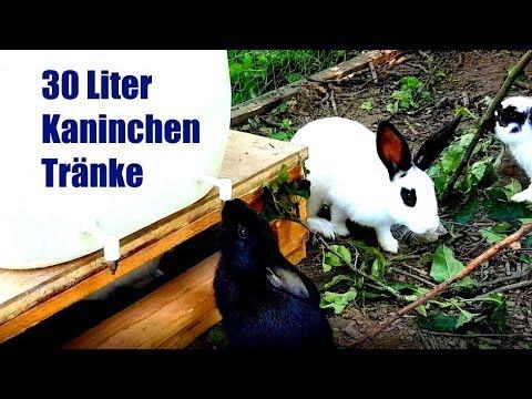 Kaninchen Tränke selbst bauen