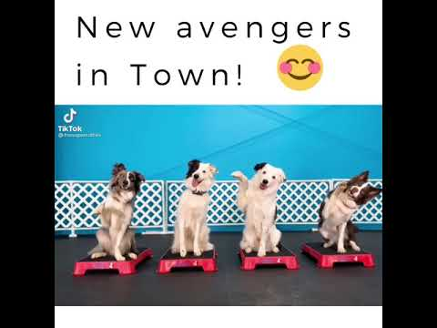 New avengers in Town!