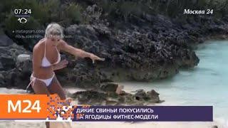 Известную фитнес-модель укусила за ягодицу дикая свинья на Багамах - Москва 24