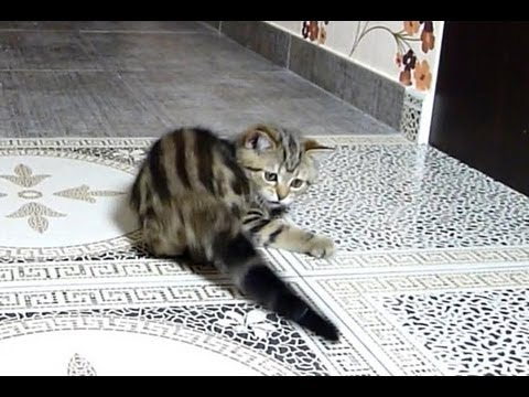 Funny Cats | How to catch the tail