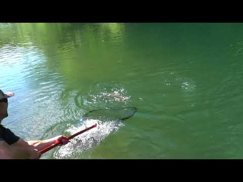Bobber-Down Steelhead with the Lamiglas SI98MS!