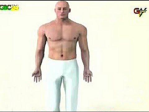 Prostata donna membro di massaggio
