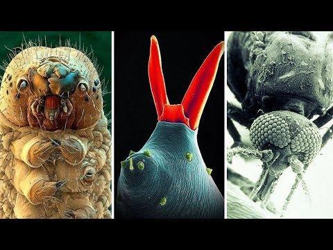 Фантастические снимки, сделанные электронным микроскопом | часть 5