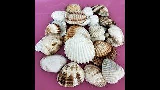 How Is The Sea Shell Drilled?-Deniz Kabuğu Nasıl Delinir?