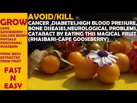 Wie viel können Sie Sonnenblumenkerne pro Tag für Patienten mit Diabetes essen